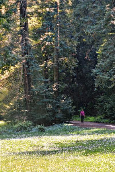 Redwood Regional Park.
