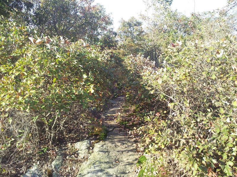 Blue Trail (Mennen) through the bushes.