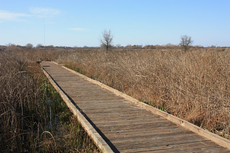 Boardwalk Trail at Cosumnes River Preserve.