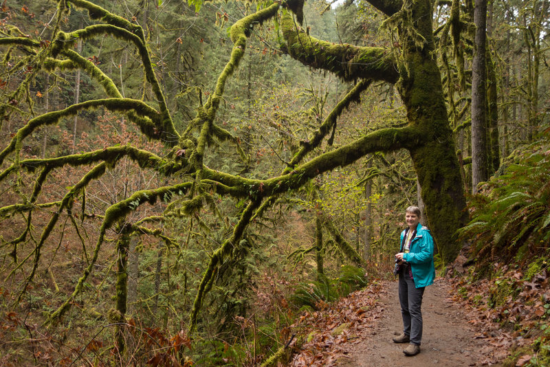 Old growth forest at Silver Falls.