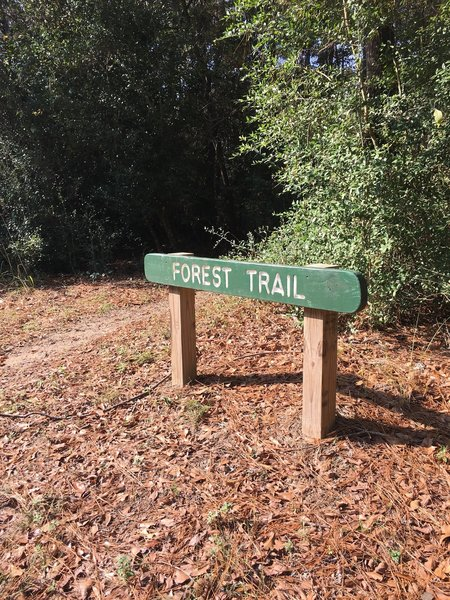Forest Trail marker at 5 mile road crossing.