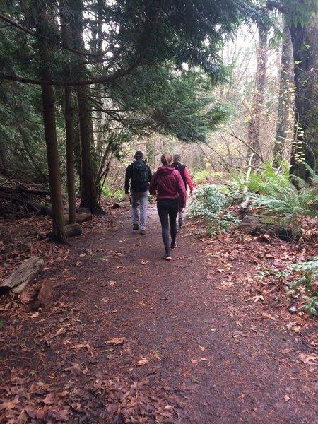 Nice trail in Carkeek Park.