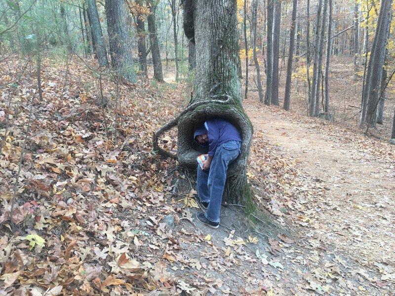 Boy being eaten by tree.