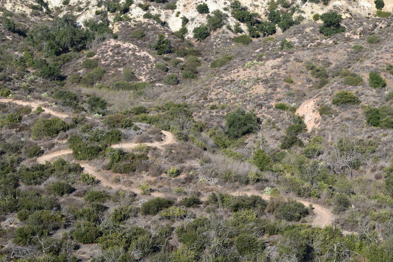 A picture of Cactus Hill Trail from a higher elevation.