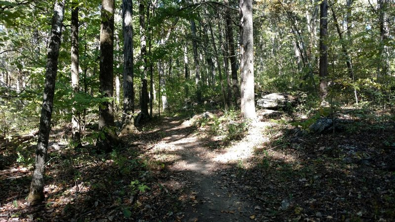 Part of the trail winding through the park forest.