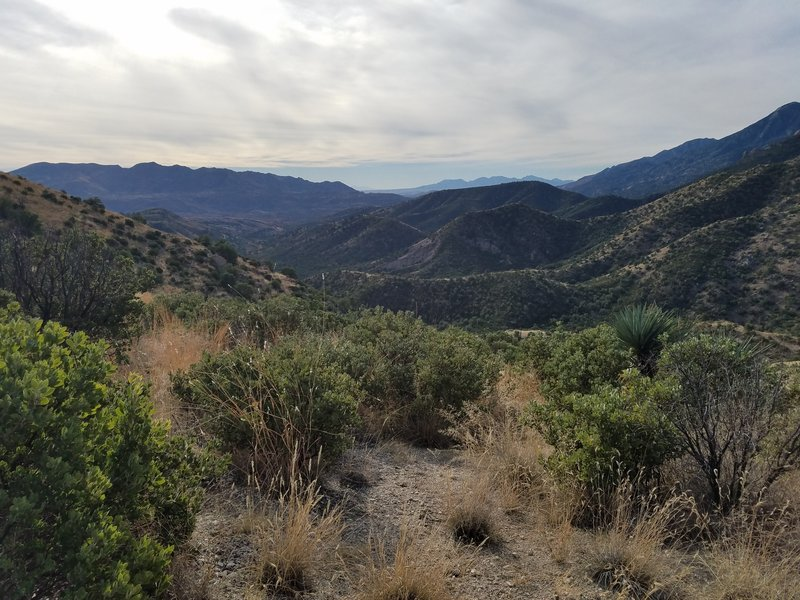 View from halfway up the trail.