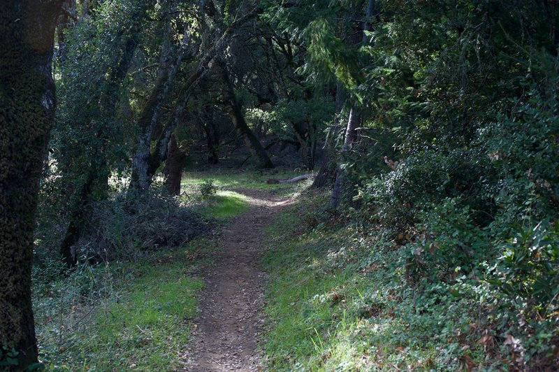The trail is fairly narrow as it winds its way through the woods.