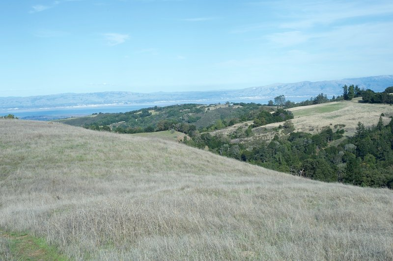 Views of the Bay Area stretch out before you. If you look closely in the field, you can see two coyotes before they get scared off.