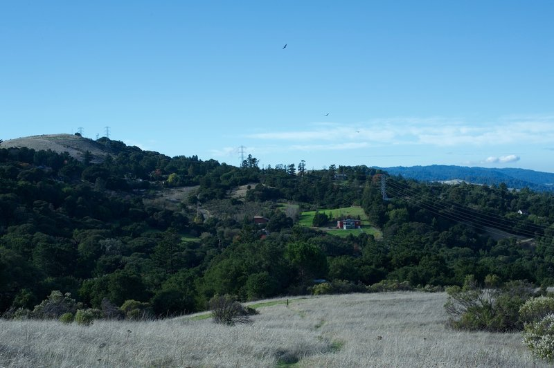 On the left side, private homes are visible from the preserve as turkey vultures soar overhead.