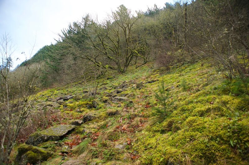 Moss-covered trees and rocks on the hillside above the trail.