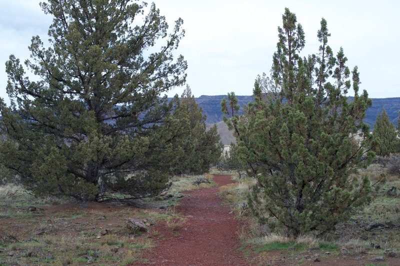 The trail makes its way back to the fork. There are small trees in the area, nourished by seasonal rain.