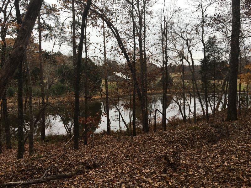 A slight ridge above the pond.