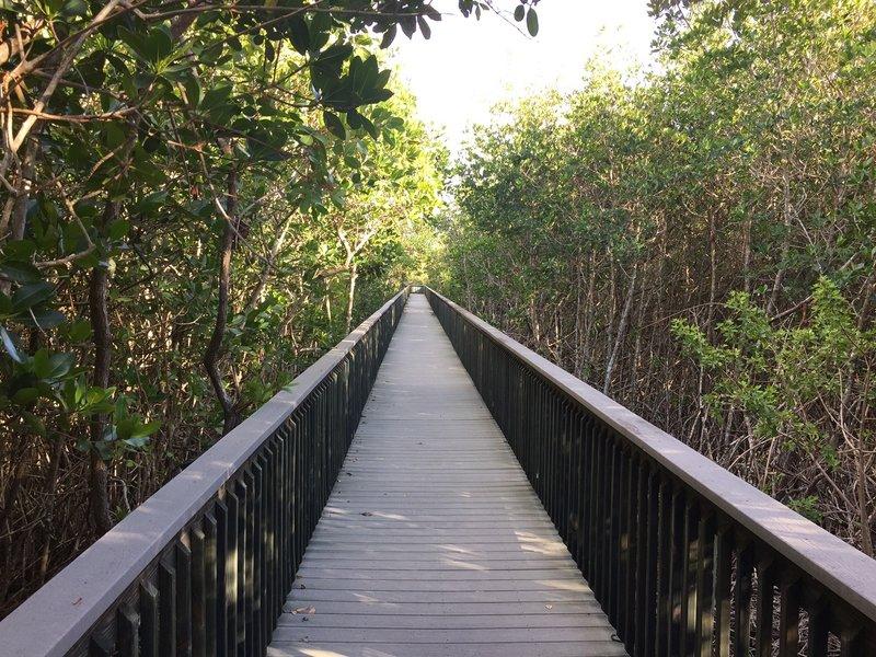 Boardwalk looking east