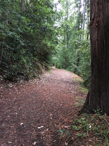 Beautiful trees and wide trails!