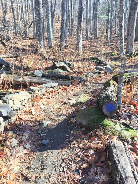 Here is the blue blaze at the toolshed trail intersection - go this way!
