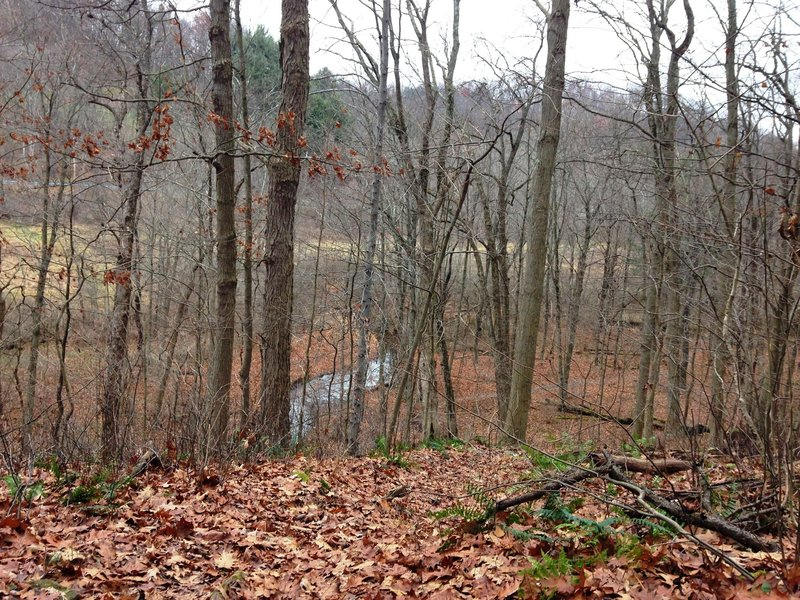 At the crest of the dropoff on the Towhee Trail looking over Trout Run and the flood plain.