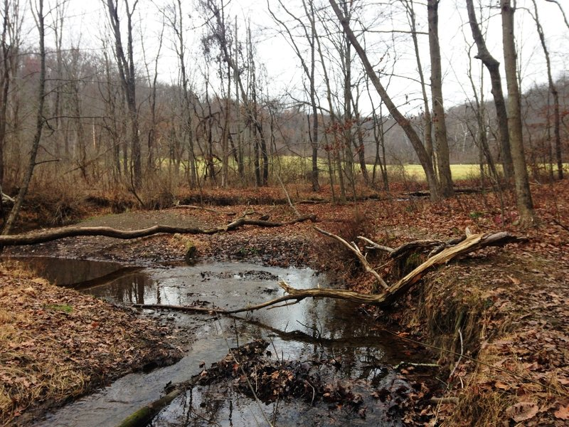 Trout Run is a typical PA stream with muddy banks, debris, and river-stone shores.