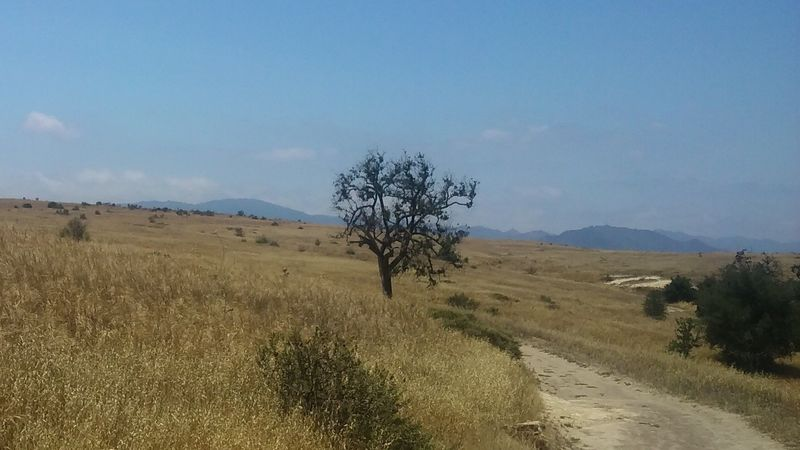 A view from the northern portion of the Mary Weisbrock Loop Trail in Upper Las Virgenes Canyon Open Space Preserve