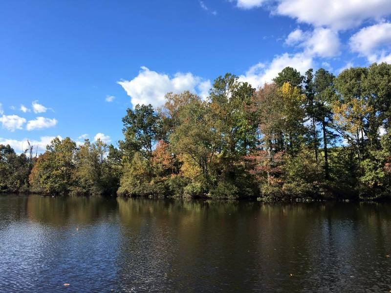 A deciduous treeline makes for a pretty sight from the fishing dock on the Red Blaze Trail.