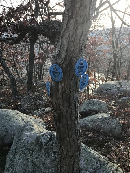 An odd marking at a switchback where all the markers can be seen on a skinny tree