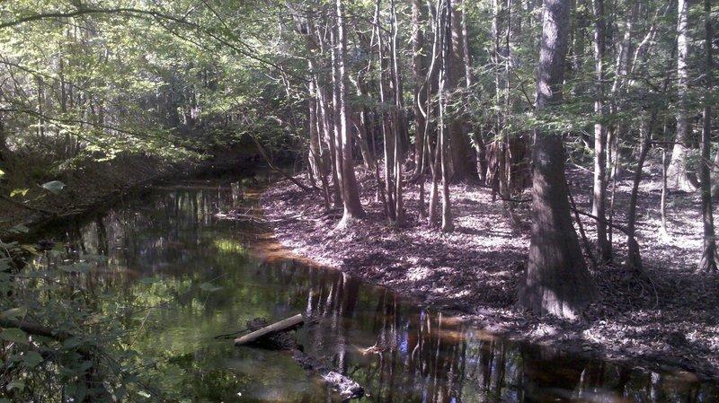 Cedar Creek as seen from the Oakridge Trail.