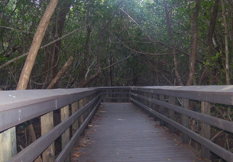 Entering a tunnel of mangroves on West Lake Trail.