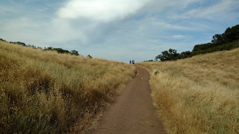 Golden grasses surround the trail as it descends away from civilization.