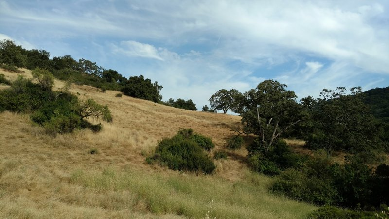 Pristine grass hills dot the landscape in Almaden Quicksilver County Park.