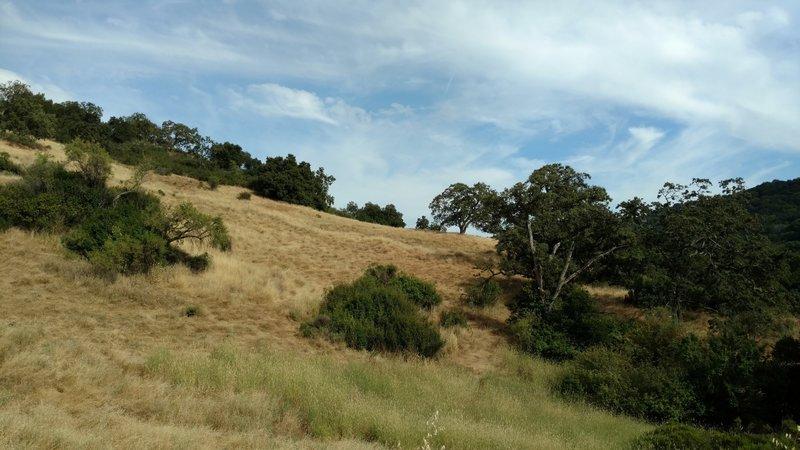 Pristine grass hills dot the landscape in Almaden Quicksilver County Park.