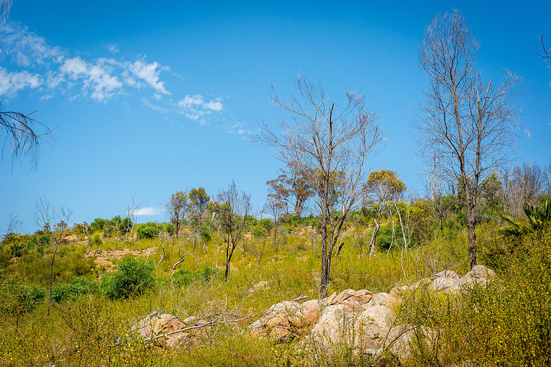 Dense grasses and somewhat-spartan trees pepper the landscape around the Echidna Trail.