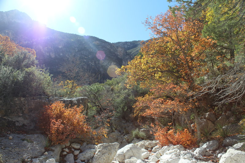 The Devil's Hall Trail is beautiful in the fall.