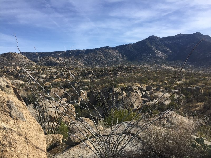 Looking towards the Catalinas over a field of boulders from the Middlegate Trail.