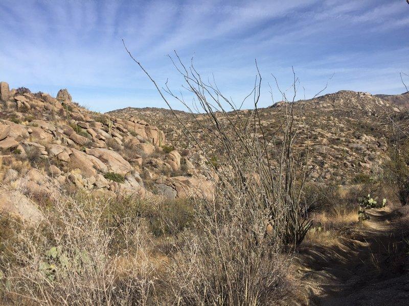 An interesting desert vista among boulders and ocotillo.