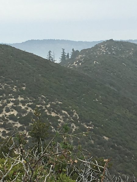 Trees north of the summit survive at over 4500 feet in elevation.
