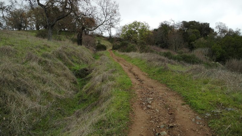 Enjoying the Cinnabar Trail (New Almaden Trail/Mine Hill Trail connector) is a great way to spend a winter day.