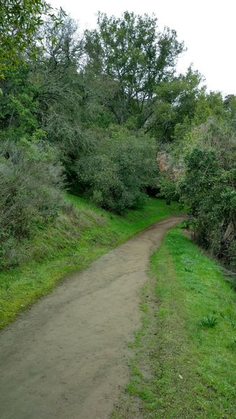 Even though it's winter, the wooded hillside along the Guadalupe Trail stays nice and green.