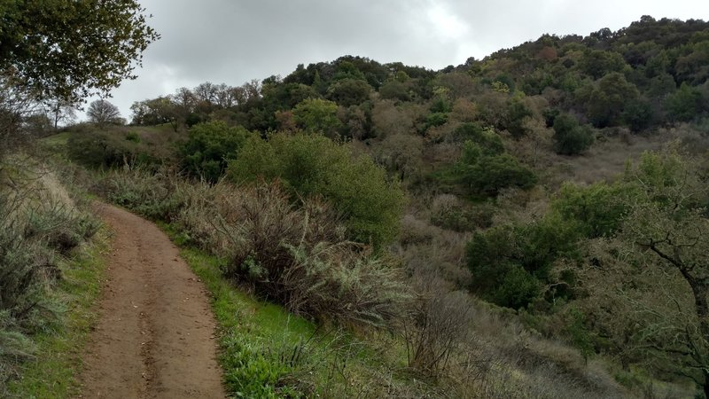 The New Almaden Trail offers a beautiful landscape for all to enjoy, even on a winter's day.