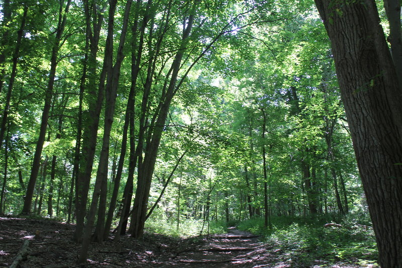 The Laura Trail is beautifully shaded by large trees over the Bird Hills portion.