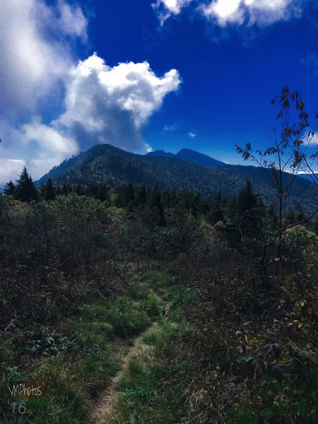 The Black Mountain Crest Trail offers fantastic views of Mt. Craig in the distance.