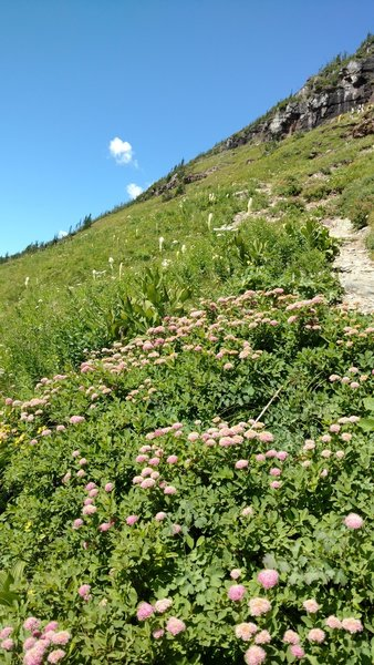 Summer wildflowers on the slopes surrounding Hidden Lake.