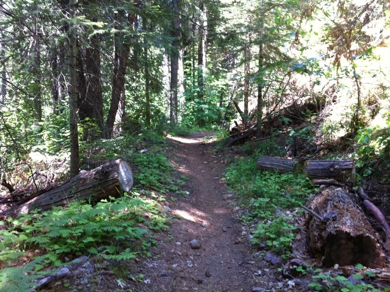 The Arnold Rim Trail is a great trail that is only going to get better!