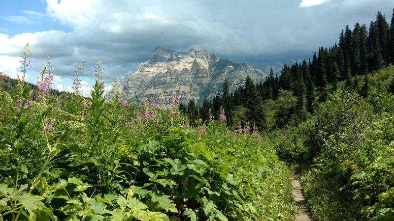 Vimy Peak and summer wildflowers from the Bertha Lake Trail.