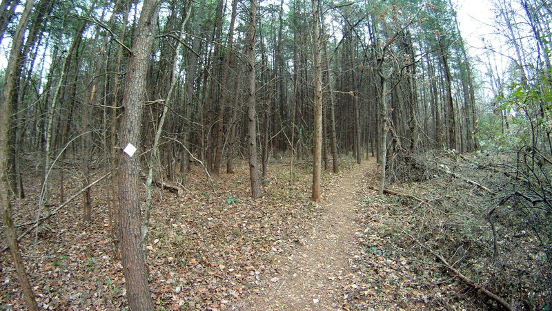 """The """"Haunted Woods"""" section of the trail goes through scrubby pines that creak and scrape against each other, and fall down pretty often from the looks of it. GoPro semi-fisheye effect makes it extra creepy."""