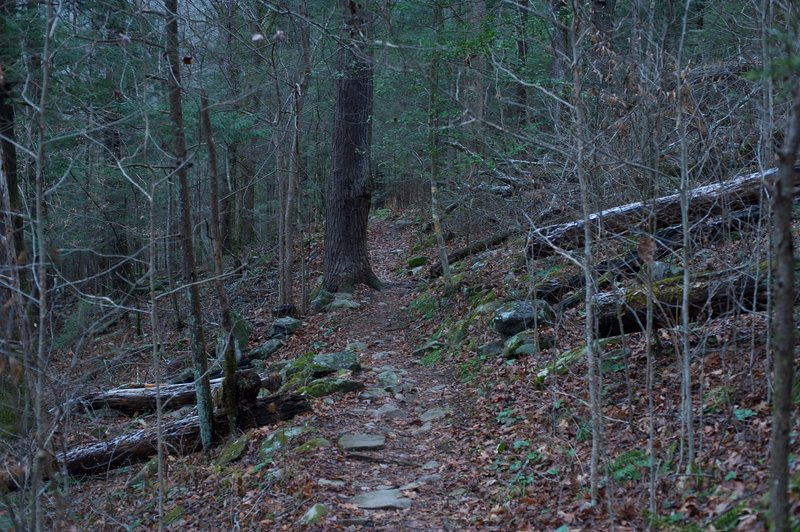 The trail as it runs along the backside of the Tremont Institute.
