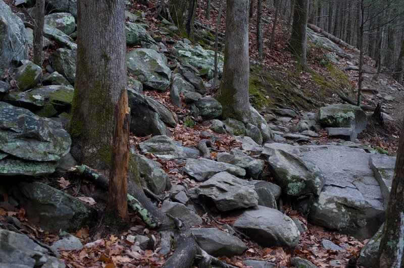 The trail crosses a rock field at Bull Branch.