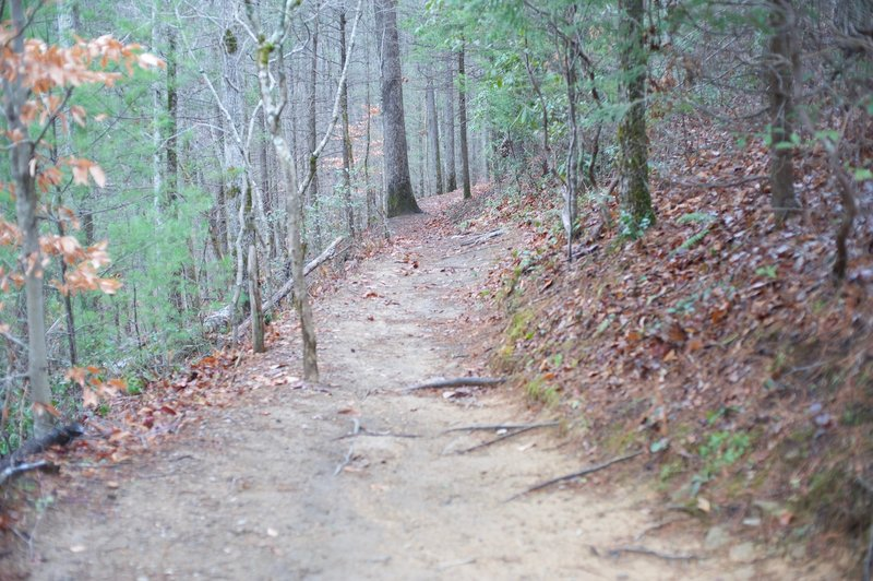 This is looking back up the trail as you get closer to the falls.