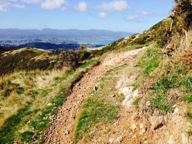 Looking out along the track to Wellington below and the hills above Eastbourne in the distance.