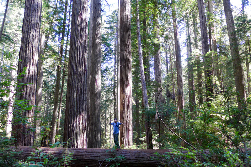 I'm as mighty as the great redwoods!