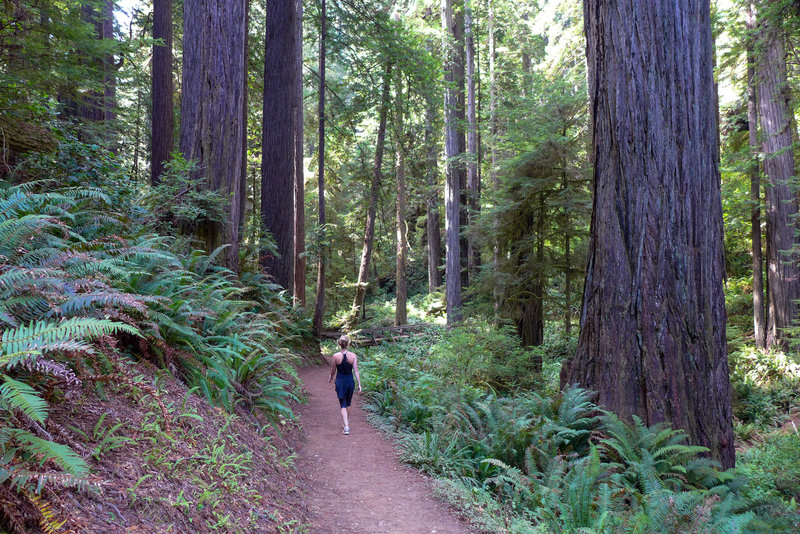 The James Irvine Trail is such a beautiful, well-maintained trail.