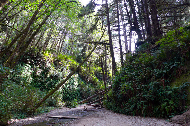 The end/entrance to Fern Canyon is spectacular and pretty unique.